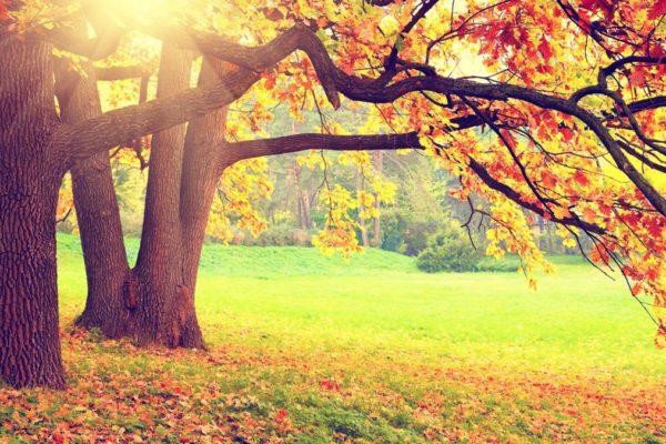 Autumn Leaves Screen Saver 1