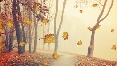 Autumn Leaves Screen Saver 4