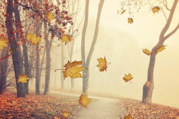 Autumn Leaves Screen Saver 4