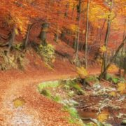 Autumn Leaves Screen Saver 2
