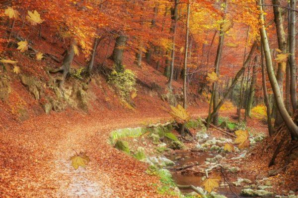 Autumn Leaves Screen Saver 2