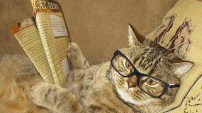 intellectual cat