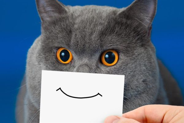 we can make you smile cat