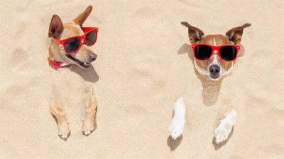 cool dogs chilling in the beach sand