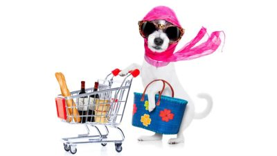 shop dog shop