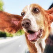 Funny Dogs Plus Windows Screen Savers