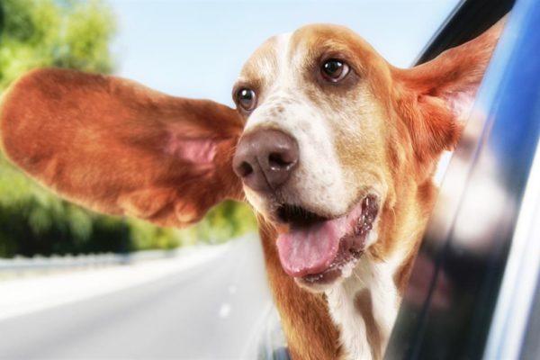 ear plane hound