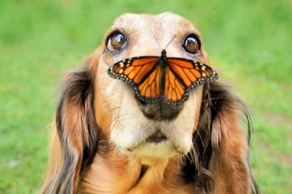 butterfly snout