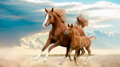 mommy and baby horse out for a run
