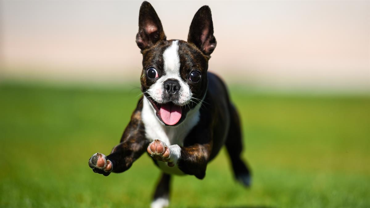 Puppies Plus Windows Screen Savers